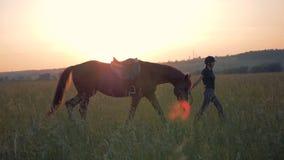 Den kvinnliga ryttaren går en häst på en solnedgångbakgrund lager videofilmer
