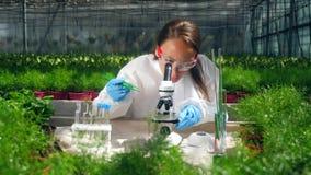 Den kvinnliga specialisten observerar en växt under ett mikroskop lager videofilmer