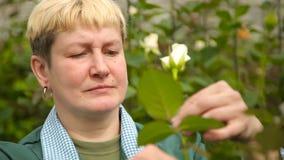 Den kvinnliga trädgårdsmästaren trycker på rosen arkivfilmer