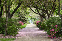 Den lägre senaten arbeta i trädgården Washington DC Arkivfoton