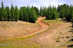 In den ländlichen Gebieten, in den Wegen und im Wald lizenzfreies stockbild