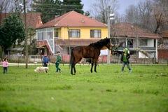 In den ländlichen Gebieten Kinder, die Tiere lieben lizenzfreie stockfotografie