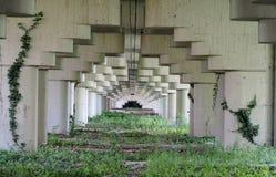 Den länge övergav tunnelen under en infrastruktur, med halv cirkulärbetong formar över och gräs och murgrönan under Royaltyfri Bild