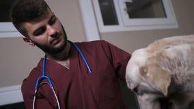 Den låga vinkeln av veterinären som slår hunden och skakar, tafsar arkivfilmer