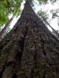 Den långa trädstammen i natur royaltyfri bild
