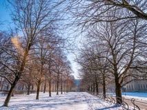 Den långa vägen i trädgårds- Park är den mycket kalla vintersäsongen nära Munich Residenz Utrymme för dag för blå himmel för text royaltyfria bilder