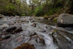 Den lösa floden flödar under en bro i Tongariro Forrest Park New-Zealand arkivbild