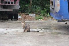 Den lösa katten är tyst arkivbild