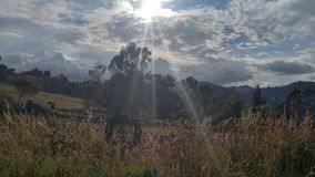 Den lösa naturen av bogota, Colombia Royaltyfri Bild