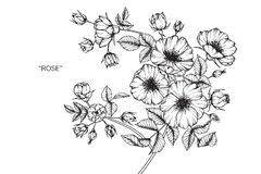 Den lösa rosblommateckningen och skissar Royaltyfria Bilder