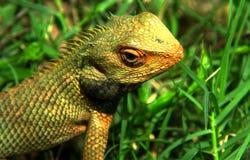 Den lösa skönheten av naturen, evolutionen av draken royaltyfria bilder