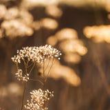 Den lösa växten som är fullvuxen i ett höstfält i sol, rays Royaltyfri Bild