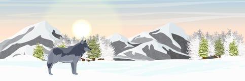 Den lösa vargen står i en snöig nordlig dal Berg och prydlig skog royaltyfri illustrationer
