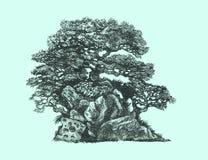Den lövfällande bonsai vaggar på Royaltyfri Fotografi