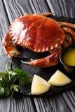 Den lagade mat hela bruna ätliga krabban tjänade som med sås, citronen och medeltalar royaltyfria foton