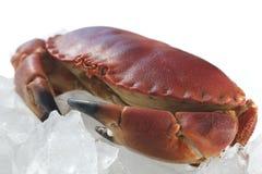 Lagad mat krabba på is Arkivbild