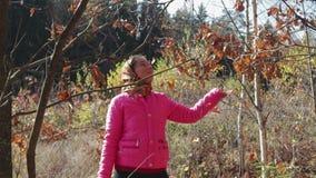 Den lantliga flickan tycker om bladnedgången i höstskogen lager videofilmer