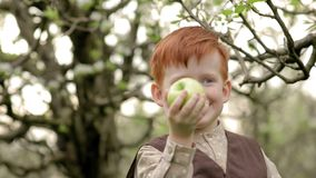 Den lantliga rödhåriga pojken äter ett äpple i en blommande trädgård i ultrarapid stock video