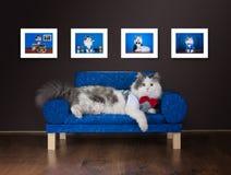 Den lata katten vilar på soffan Arkivfoto