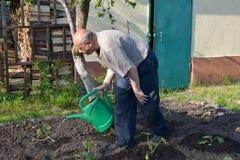 Den äldre mannen bevattnar en kökträdgård från bevattna kan Royaltyfri Bild