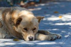 Den ledsna hunden grundar på gatorna av Toluca Arkivfoto