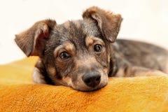 Den ledsna hunden ligger på orange filtar royaltyfri fotografi