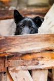 Den ledsna hus-hunden väntar en ägare Arkivfoto