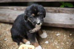 Den ledsna lilla valpen i en träask frågar att adopteras med hopp Svart och solbränd hund för hemlös royaltyfri foto