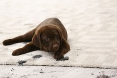Den leriga gulliga hunden som lämnar, tafsar tryck arkivbilder