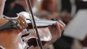 Den levande konserten, kvinna spelar på träfiolklassisk musik på en suddig bakgrund stock video