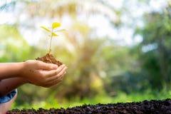 Den lilla asiatiska flickan som rymmer unga växter i naturen, parkerar och ser etapper av tillväxt Royaltyfri Bild