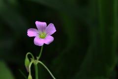 Den lilla blomman arkivbilder