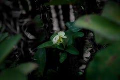 Den lilla blomman för skönhet Arkivbild