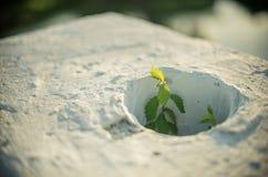 Den lilla blomman planterar att växa till och med hålet i en aktuell vägg Arkivbild