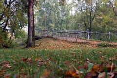 Den lilla bron i hösten parkerar Royaltyfri Fotografi