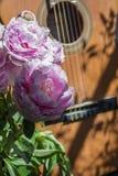 Den lilla buketten av rosa pioner är nära den bruna gitarren Arkivfoton