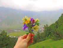 Den lilla buketten av sommar blommar i hand Utrymme för text Grön bakgrund av gräs och berg Arkivfoto