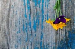 Den lilla buketten från sidan på en gammal trämålad blått stiger ombord med sprickor, textur Arkivfoton