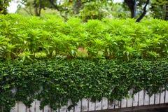 Den lilla busketrädgården är tropiska Forest Park Royaltyfri Fotografi