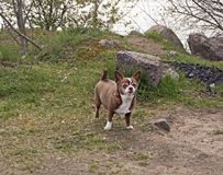Den lilla chihuahuahunden i parkerar arkivbild