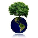Den lilla ecoplaneten med trädet och rotar på den värld för leaf för green för begreppsdroppjord Arkivfoton