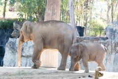 Den lilla elefanten med modern Arkivfoton