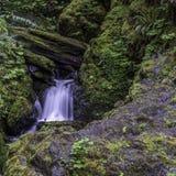 Den lilla fågeln beundrar vattenfallet fotografering för bildbyråer
