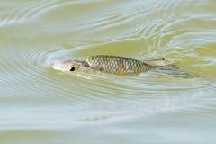 Den lilla fisken på yttersidan av hav s Arkivfoton