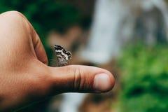 Den lilla fjärilen på mans handen pov royaltyfria bilder