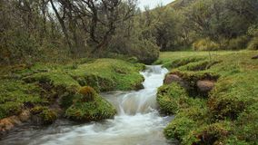 Den lilla floden i en skog av Polylepis lokaliserade i heden av den ekologiska reserven Los Ilinizas Arkivfoto
