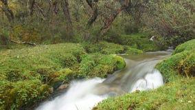 Den lilla floden i en skog av Polylepis lokaliserade i heden av den ekologiska reserven Los Ilinizas Arkivbild