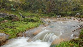 Den lilla floden i en skog av Polylepis lokaliserade i heden av den ekologiska reserven Los Ilinizas Royaltyfri Foto