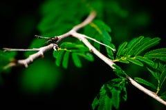 Den lilla flugan på trädvinsten royaltyfria foton