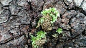 Den lilla gröna mossan Arkivfoto